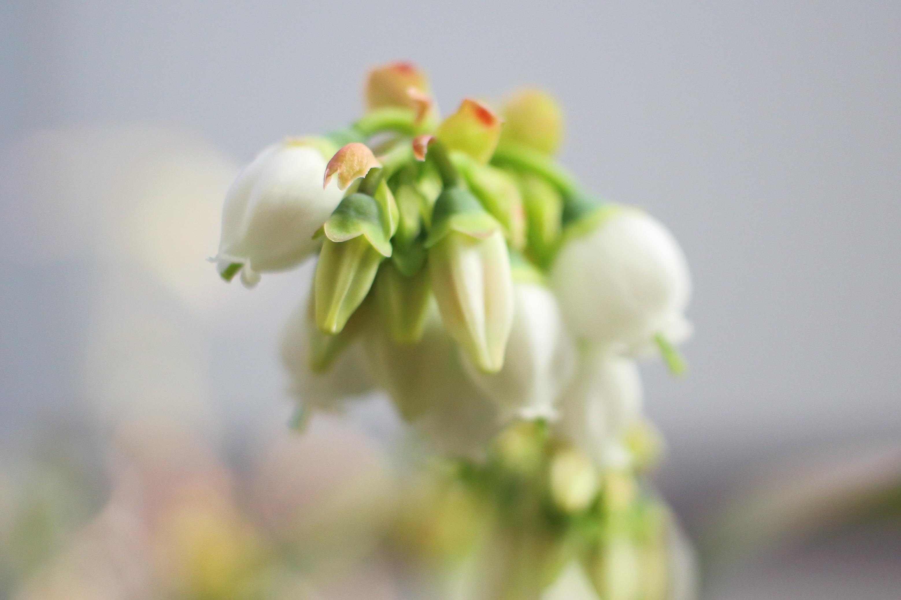 タイタンの開花状況